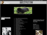 oscaes.com.br