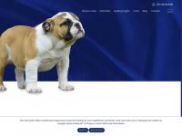 Reserva do Rei - Bulldog Inglês
