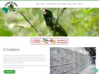 Criatorioriobonito.com.br - Criatório Rio Bonito - Curiós e Bicudos - Criador Comercial - Rio Bonito/RJ