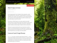 international-alliance.org