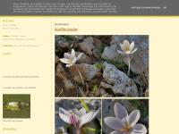 dias-com-arvores.blogspot.com