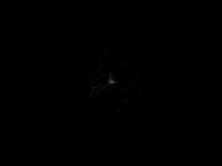 ramonlucas.com