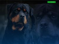 canilvonsemble.com.br