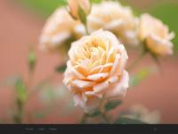 Casadasflores.com.br - Casa das flores – Sinop – MT