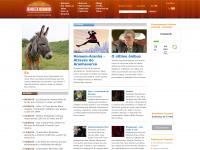 cineweb.com.br