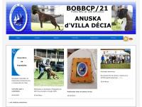 boxerclub.pt