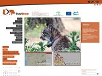 Iberlince - Lince Ibérico