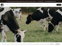 gadoholandes.com.br