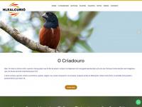 hlealcurio.com.br