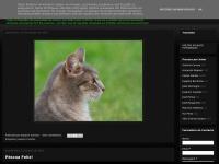 fotogenias-fotosaoacaso.blogspot.com