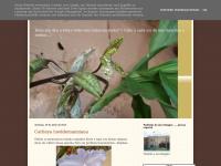 cidapedroza.blogspot.com