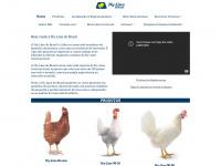 hyline.com.br
