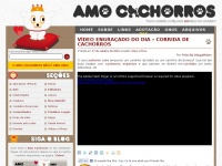 Amocachorros.com.br