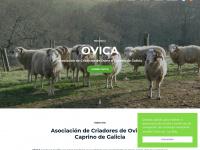 Ovica.org - OVICA | Ovino e Caprino de Galicia