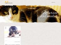 loucosporgatos.com.br