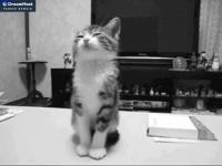 crebit.app